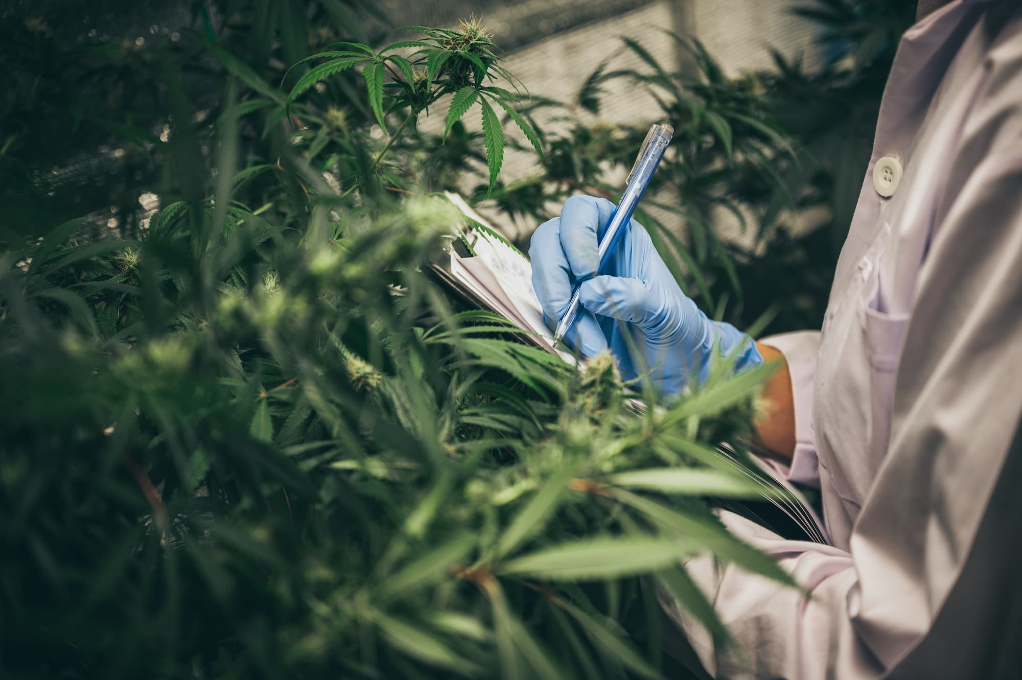 A Cannabis Operator's Guide to Writing a Business Plan