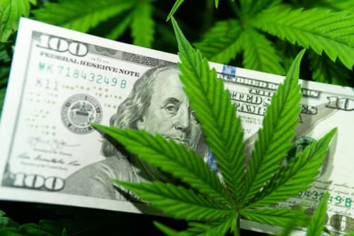 How to write a business plan for a cannabis company