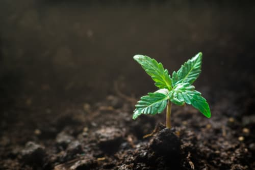 Who provides best-in-class cannabis financial services