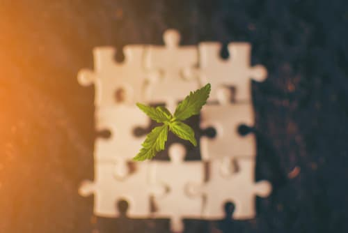 4 Questions to Ask Yourself When Applying for a Cannabis License