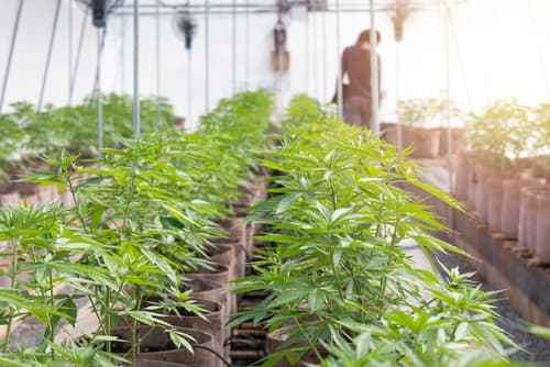 How can I deal with common cannabis compliance complaints