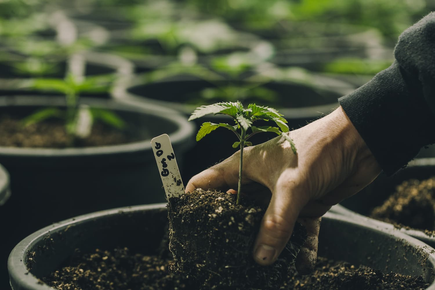 Best Ways to Finance Your Cannabis Business