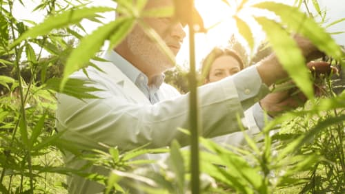 How do I find one of the best cannabis lending companies