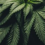 Where can operators receive reliable cannabis banking help